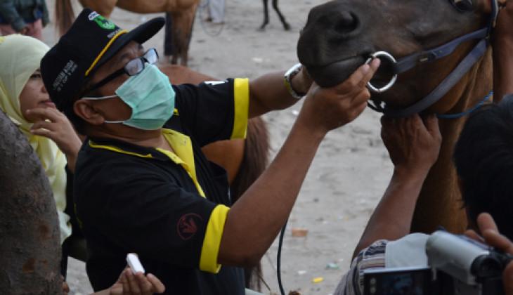 106 Kuda Parangtritis Dapatkan Pengobatan Gratis