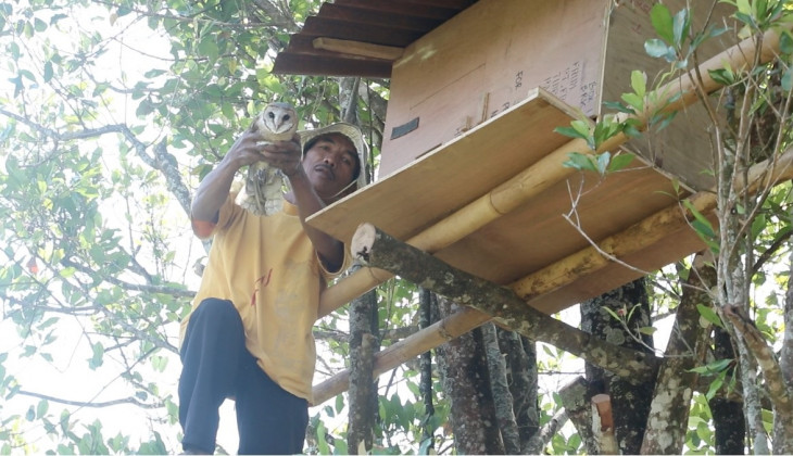 KKN UGM Bantu Petani Tangani Hama Tikus dengan Penangkaran Burung Hantu