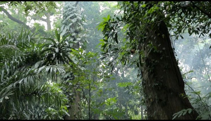 Harapan Pengelolaan Hutan untuk Masa Depan