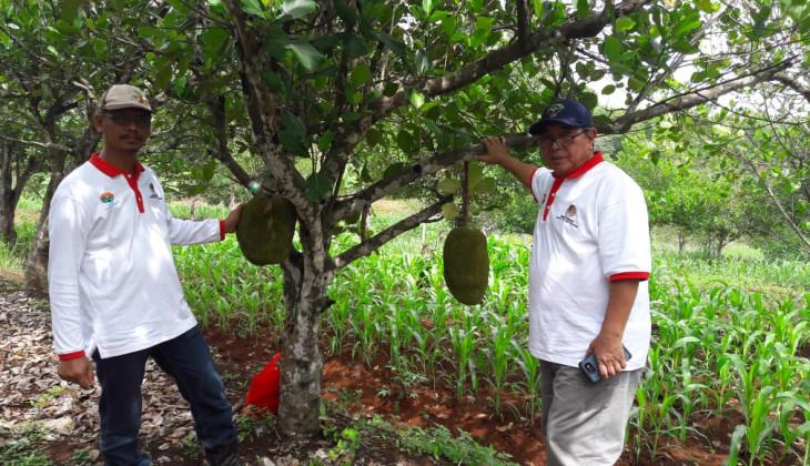 Fakultas Kehutanan UGM Kembangkan Desa Nangka di Gunung Kidul