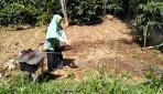 Mahasiswa UGM Lakukan Mitigasi Embun Upas di Lahan Pertanian Dieng