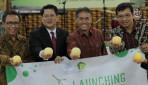 UGM Luncurkan Melon Baby Hikapel Seukuran Apel
