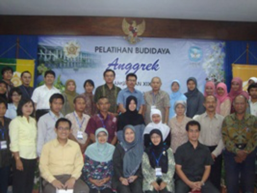 Besar, Potensi Pengembangan Budidaya Anggrek di Indonesia