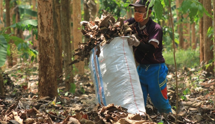 UGM Team Use Teak Leaves as Cattle Feeds