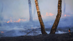 Gagas Penanganan Kebakaran Hutan, Mahasiswa UGM Juarai Kompetisi Rekinnovation