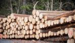 UGM Minta Pemerintah Revisi Permendag Untuk Cegah Penurunan Ekspor Produk Industri Kehutanan
