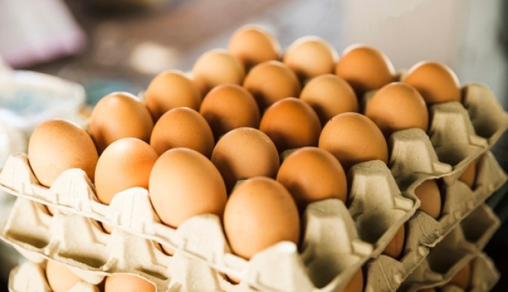 UGM Expert Explains Quality of Fertile Chicken Eggs