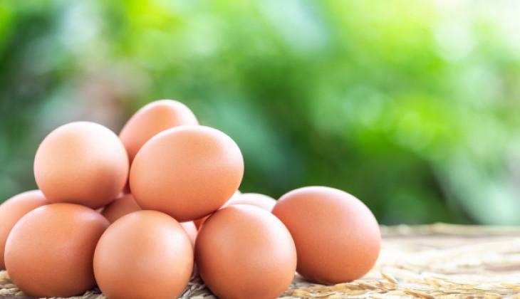 Ahli Gizi UGM: Tidak Ada Perbedaan Nilai Gizi Telur Ayam Fertil dengan Infertil