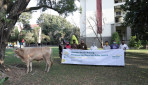 UGM Terima Bantuan Sapi dari Bank Mandiri Syariah Yogyakarta