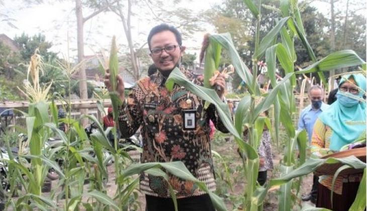 PIAT Dukung Pertanian Perkotaan di Yogyakarta
