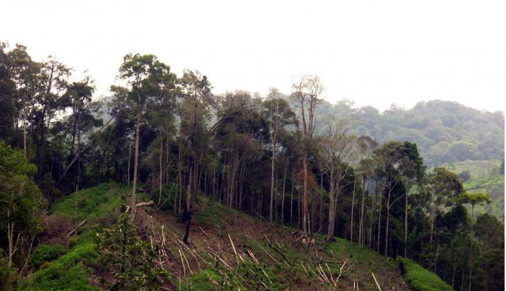 Indonesia Hadapi 14 juta ha Lahan Kritis