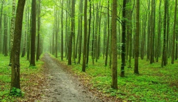 Peran Agroforestri Untuk Ketahan Pangan
