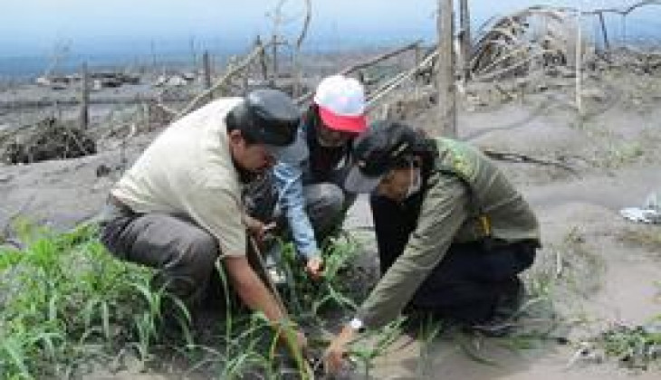 Pakar Pertanian UGM: Kinahrejo Cocok Dikembangkan menjadi Perkebunan Pisang