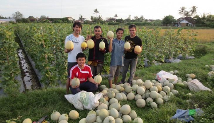 UGM Kembangkan Melodi Gama 3 sebagai Melon Tahan Cuaca Ekstrem