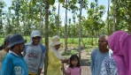 Agroforestri Untungkan Petani Hutan Jati
