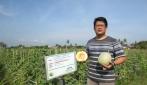 Melodi Gama 3 UGM Siap Bersaing Dengan Produk Melon Impor