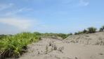 Peneliti Biologi UGM Manfaatkan Potensi Gumuk Pasir