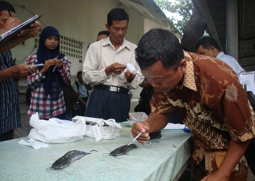 Petani Praktik Vaksinasi Ikan
