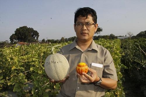 Dosen UGM Sukses Kembangkan Gama Melon Parfum