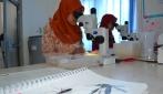 Cara Baru Atasi Demam Berdarah, UGM Perluas Pelepasan Nyamuk Ber-Wolbachia