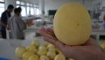 Ada Melon Granat dari UGM