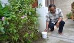 UGM Lepas Nyamuk Ber-Wolbachia di Bantul