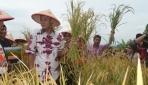 UGM, Pemprov Jateng dan Perhutani Panen Padi di Pakuncen