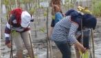 Cegah Abrasi Pantai Trisik, Mahasiswa UGM Tanam 4 Ribu Bibit Mangrove