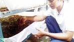 Mahasiswa UGM Kembangkan Bisnis Budidaya Cacing Tanah