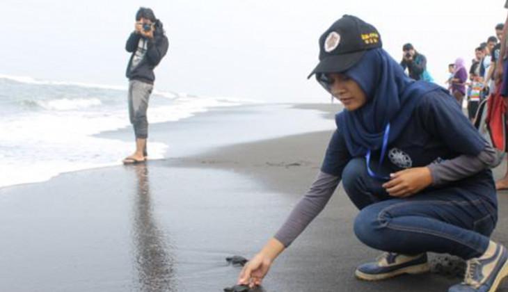 Konservasi Penyu, Mahasiswa UGM Lepas Tukik di Pantai Trisik
