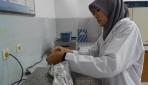 Mahasiswa UGM Teliti Jamur Tiram sebagai Penghambat Penyebaran Sel Kanker Payudara
