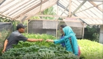 Anggota tim aloevera tengah melakukan survei penegmbangan metode pertanian hidroponik di sebuah perusahan pertanian hidroponik di Sleman.