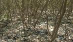 Mahasiswa UGM Dorong Kesadaran Masyarakat Lestarikan Mangrove Wonorejo