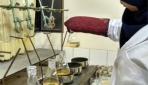 Limbah Kulit Kakao Berkhasiat Cegah Masitis pada Sapi Perah