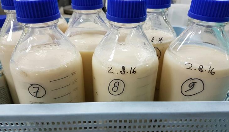 Peneliti UGM Kembangkan Bakteri Asam Laktat Strain Lokal