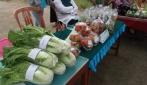 UGM Ikut Mengembangkan Sumber Daya Alam Desa Banyuroto