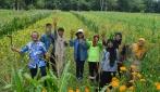 Petani Binaan UGM Mampu Memproduksi Kedelai Tiga Kali Lebih Banyak