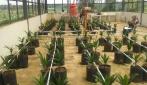 Mahasiswa UGM Kembangkan Sistim Irigasi Otomatis Untuk Kelapa Sawit
