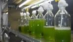 Peneliti UGM Kembangkan Mikroalga Strain Lokal Sebagai Bioenergi