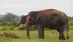 Mahasiswa UGM Mengeksplorasi Kekayaan Fauna Taman Nasional Way Kambas