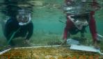 Mahasiswa Biologi UGM Ungkap Biodiversitas Laut Pulau Wangi-wangi