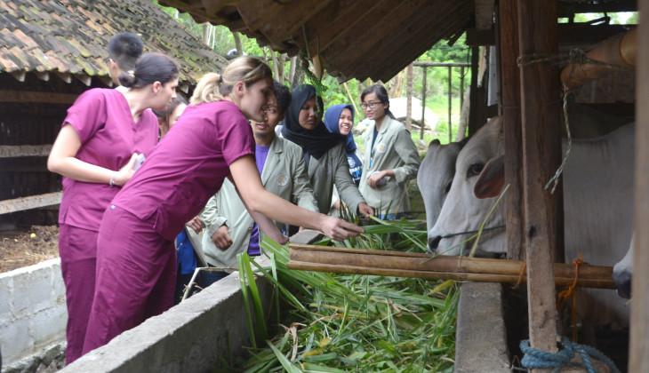 Mahasiswa Asing Berpartisipasi dalam Kegiatan KKN PPM UGM