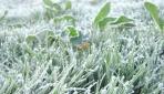 Mahasiswa UGM Merancang Skema Asuransi Iklim untuk Bencana Frost