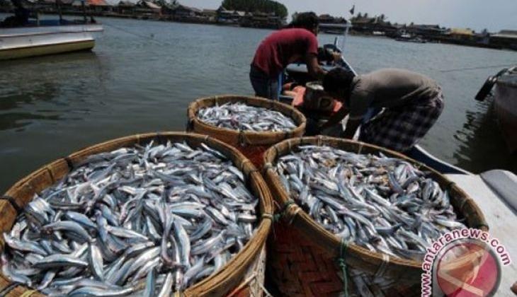 Konsumsi Ikan Tingkatkan Kecerdasan Otak