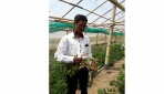 Fakultas Biologi UGM Kembangkan Kacang Tanah Unggul