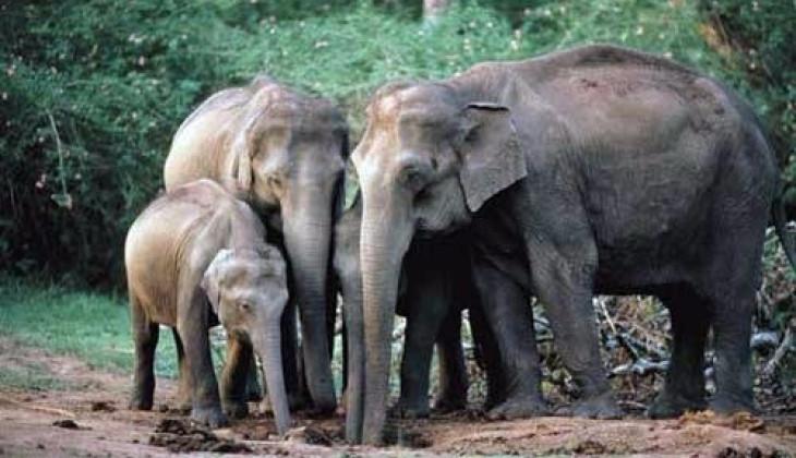 FKH UGM Berupaya Meningkatkan  Jumlah Populasi Gajah Sumatera